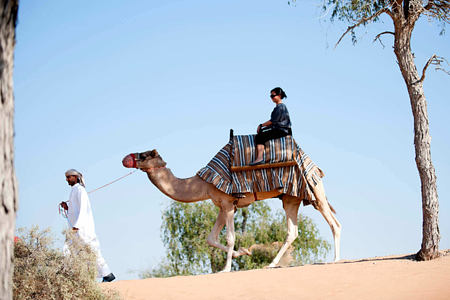 camel riding at banyan tree alwadi hotel uae
