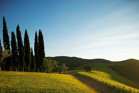 morning landscape at Castiglion del Bosco