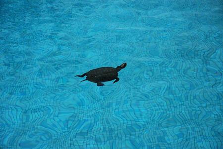 turtle at la roseraie hotel morocco