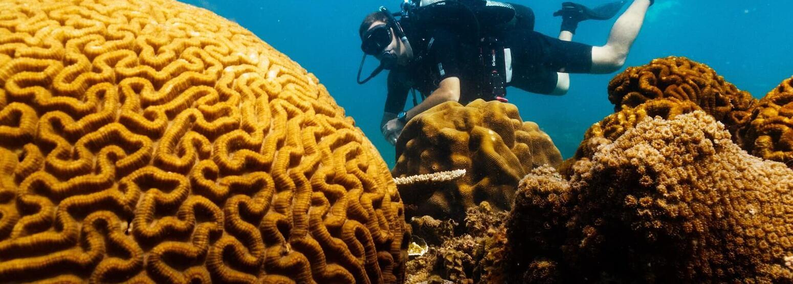 diving at six senses con dao hotel vietnam