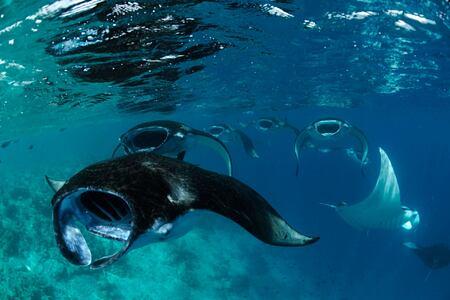 diving fish at Four Seasons Landaa Giraavaru hotel maldives