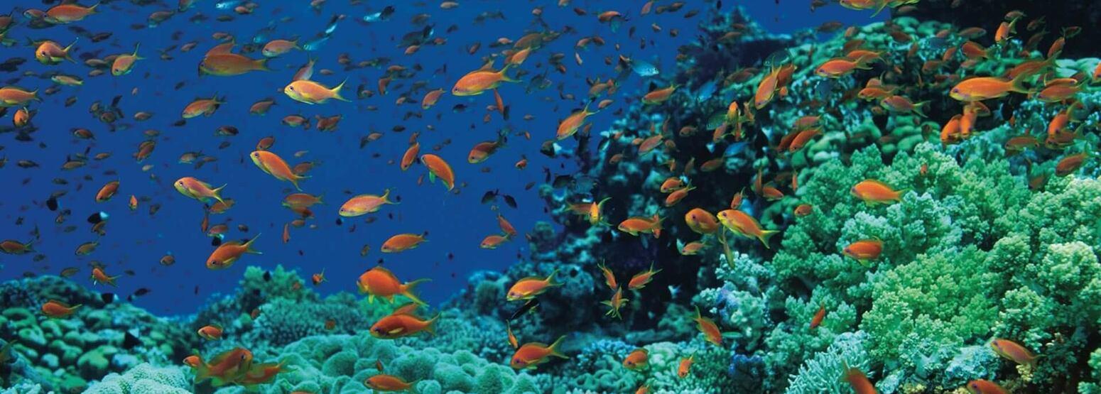 diving at four seasons sharm el sheikh