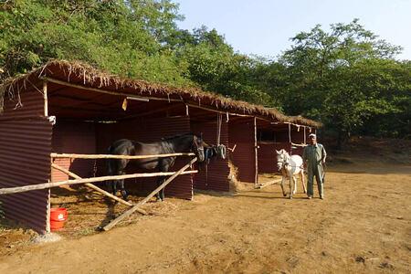 horses at Shillim Retreat and Spa