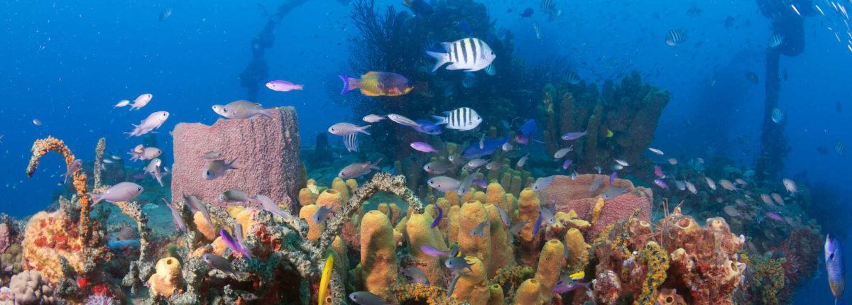 diving at ti kaye resort and spa