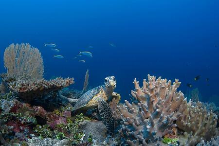 diving at six senses laamu hotel maldives