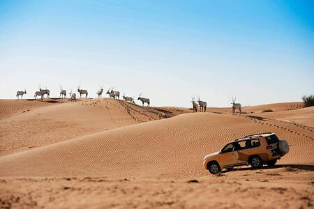 arabian adventures at al maya desert resort dubai