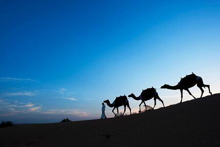 camel trekking at al maya desert resort dubai