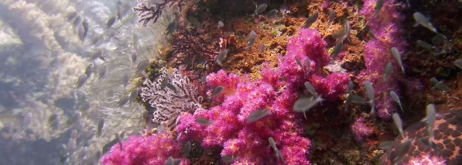 colourful coral at Tanjong Jara Resort Malaysia