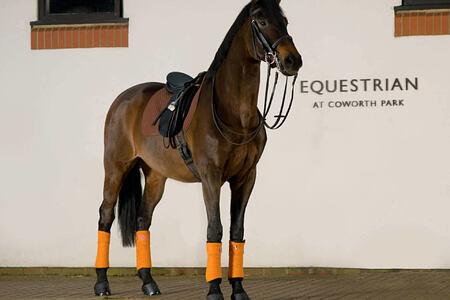 equestrian facilities at coworth park england uk