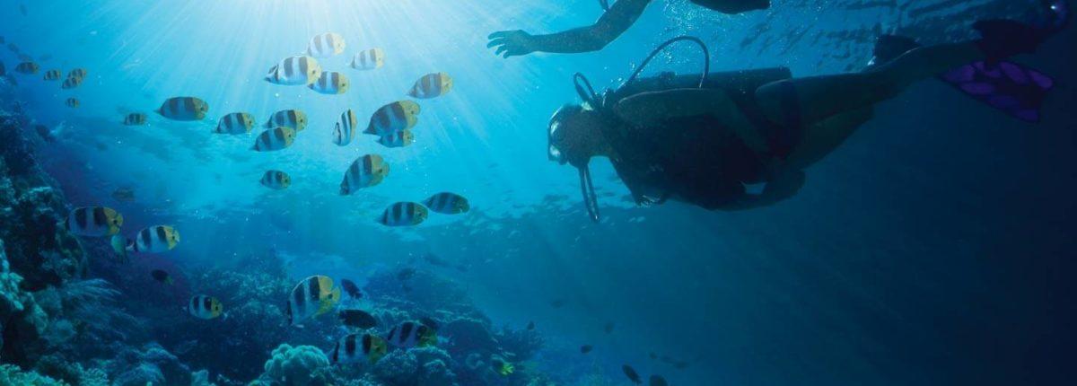 scuba diving at sandals emerald bay resort bahamas