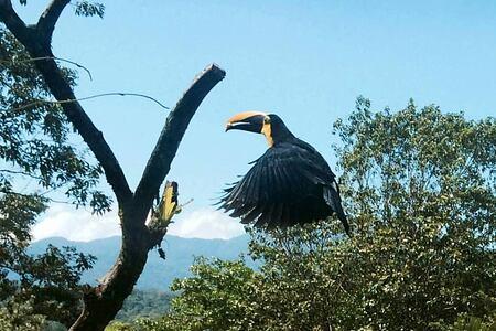 teeming in wildlife at lost iguana hotel costa rica