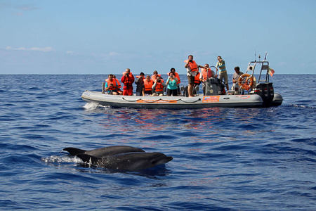 whale and dolphin watching at Gaolosol Resort Madiera