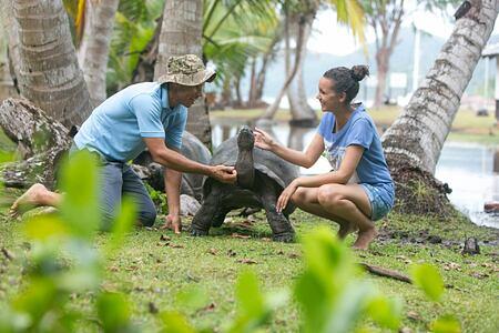 Giant tortoise at Raffles Praslin Seychelles