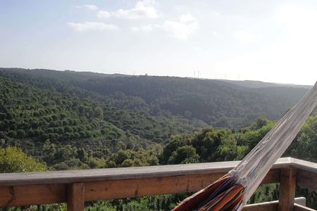 Panorama across forest at Monte Velho, Portugal