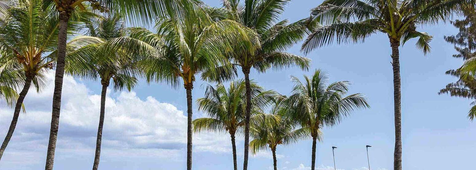 Beach at Le Canonnier Mauritius