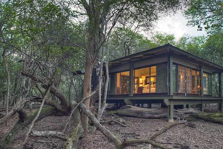 Forest Room at Phinda South Africa