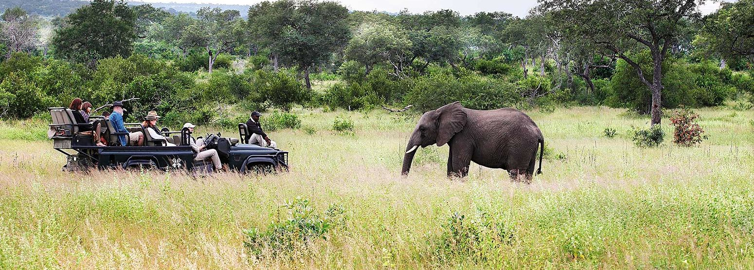 Game vehicle with elephants at Londolozi South Africa