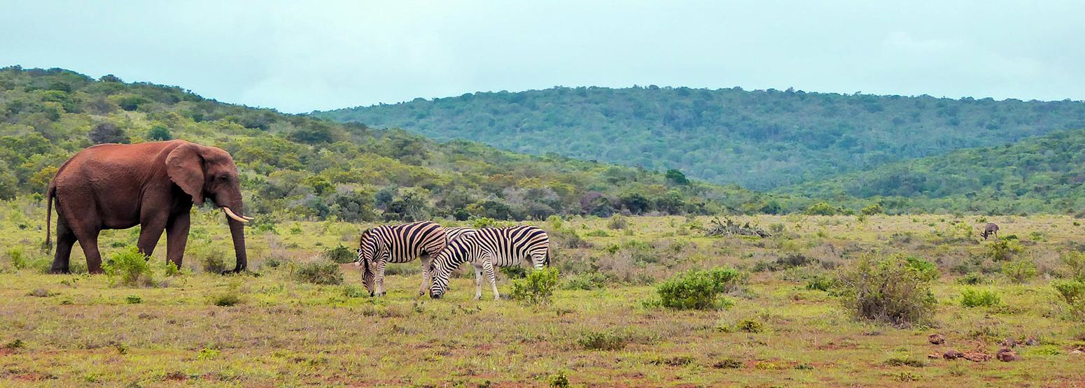 Limpopo South Africa