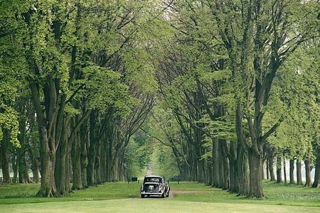Tree-lined drive at Lucknam Park England