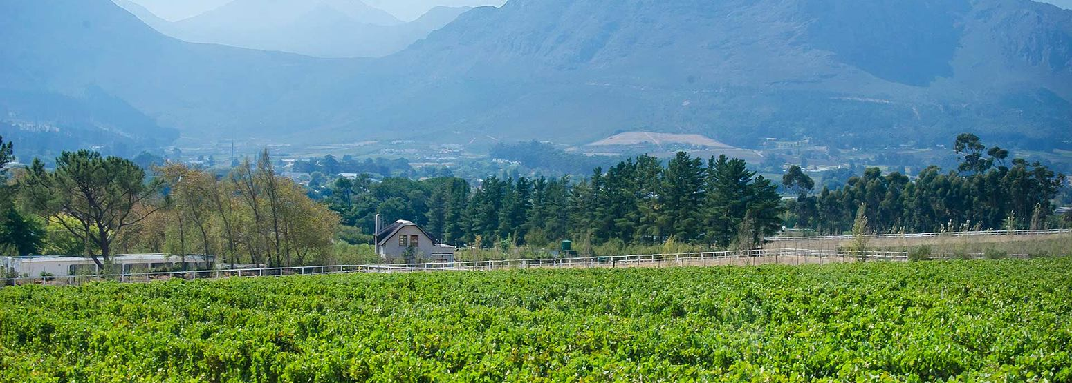 Vineyards at Mont Rochelle Franschhoek South Africa