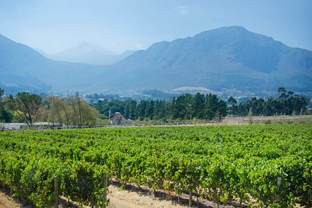 Vineyards at Mont Rochelle Franschhoek South Africa