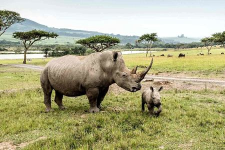 Rhino at Karkloof Safari Spa KZN South Africa